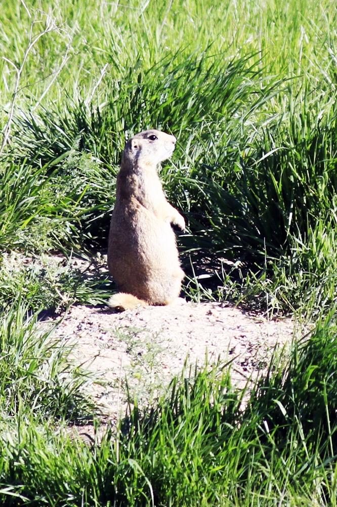 Day 5 - 5 prairie dog